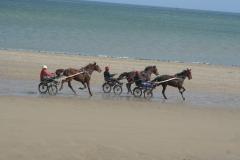 Grandcamp Maisy - entrainement des chevaux sur la plage