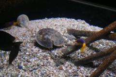 Cherbourg-aquarium