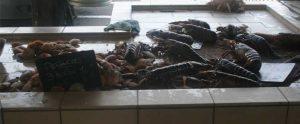Grandcamp Maisy - Etal marché aux poissons
